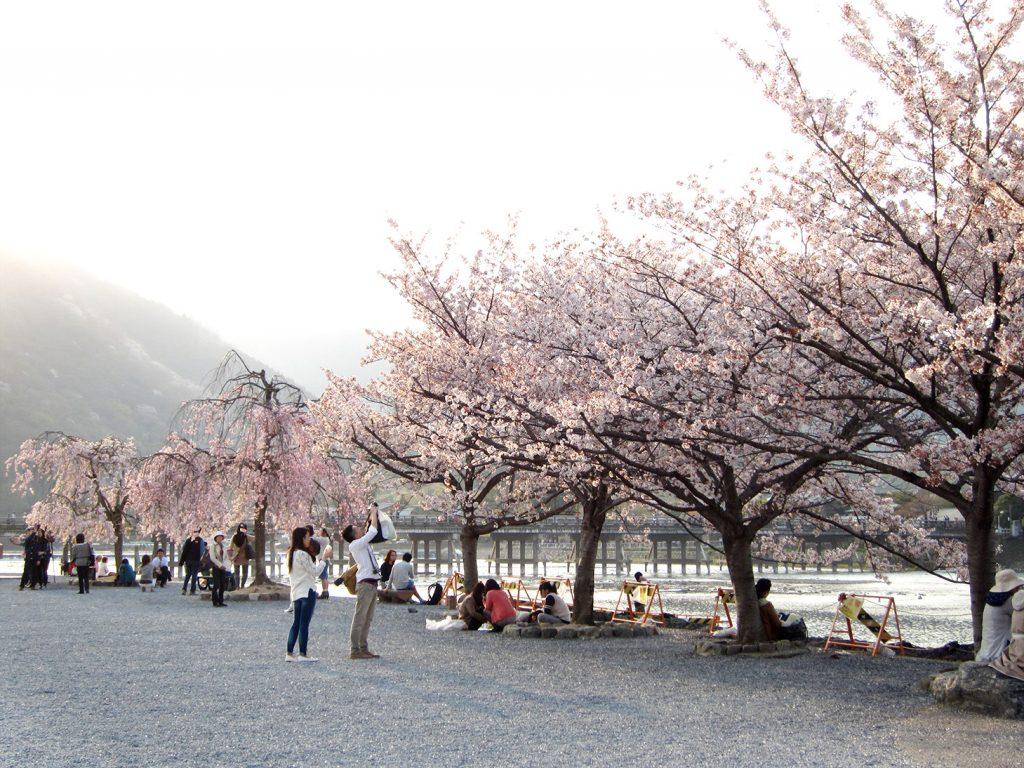 #washoku, washoku lovers, ki-yan, ki-yan's kyoto food & art, sydney food blog, japan, japanese restaurant, sweets, wagashi, ex cafe, arashiyama, japanese art, japanese culture, japanese cuisine, kyoto, kyoto restaurant, sakura, cherry blossom